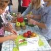 Ден на здравословното хранене и спорта, Габрово 7 октомври 2015 г. 10